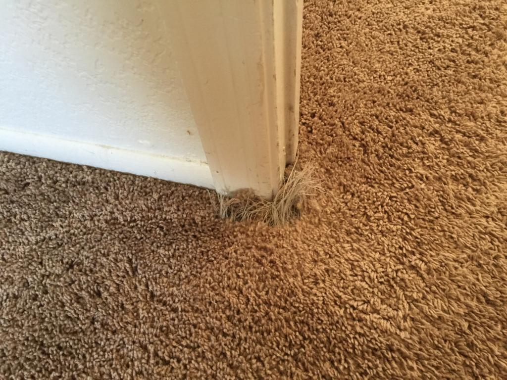 East Valley Carpet Repair In Chandler Az Arizona